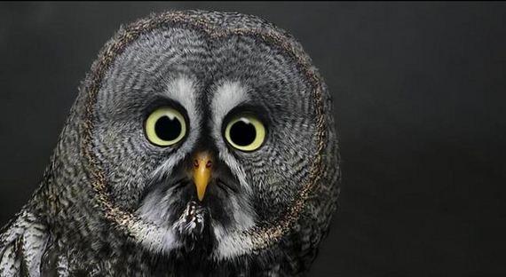 16-extremely-shocked-animals
