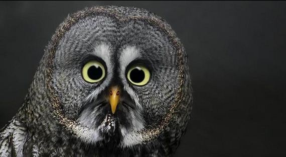 16-extremely-shocked-animals