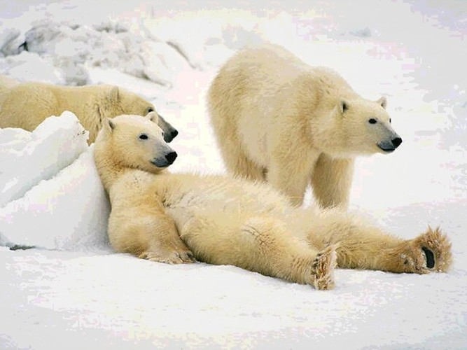 www_animaljpg_ru-257